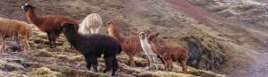 Cusco Adventure the Inca Escapade