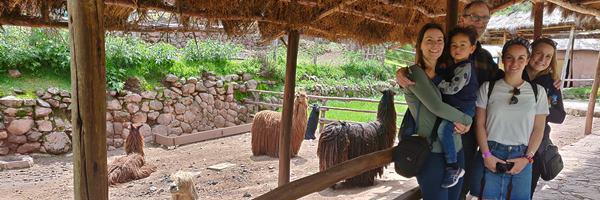 Family farm alpacas